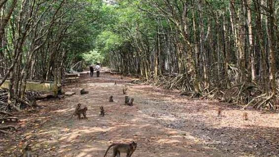 Địa điểm du lịch Cần Giờ - Đảo Khỉ