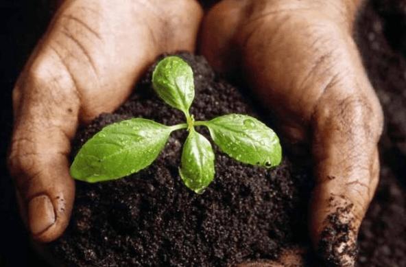Cách làm hạt giống nảy mầm nhanh