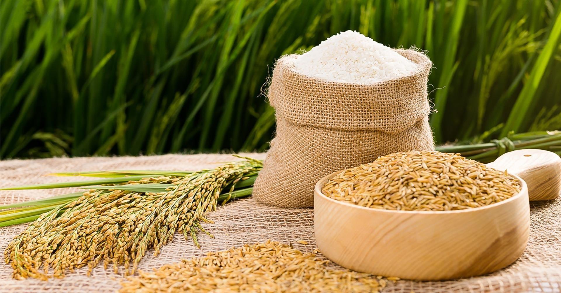 giá lúa gạo