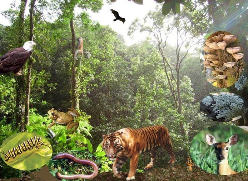Hệ sinh thái