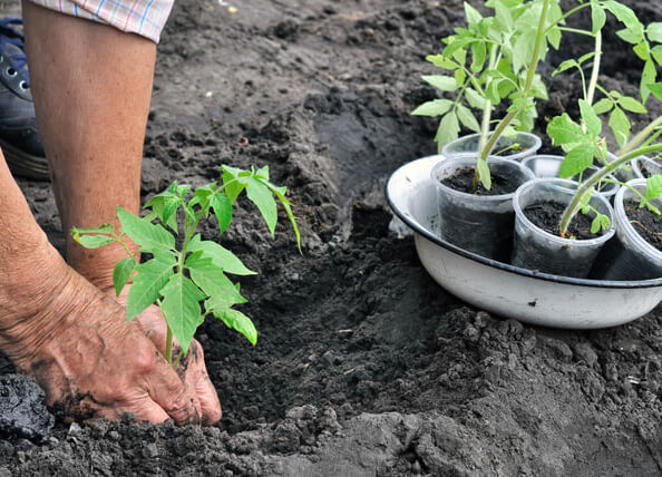 Tác dụng của tro bếp đối với cây trồng